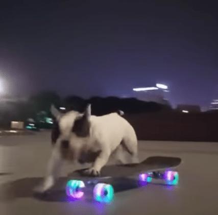 Un Câine pe skateboard (Video) 5