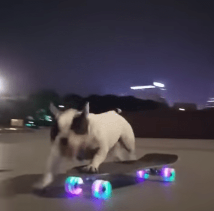 Un Câine pe skateboard (Video) 3