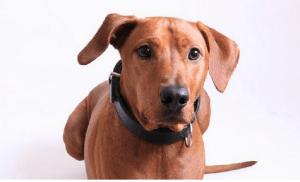 Un câine se preface că e șchiop pentru a primi atenție și mâncare din partea trecătorilor (Video)