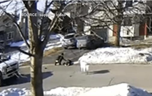 O căţeluşă din Canada i-a salvat viaţa stăpânei sale care a leşinat pe stradă 3