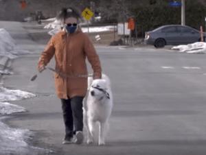 O căţeluşă din Canada i-a salvat viaţa stăpânei sale care a leşinat pe stradă