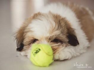 puppies-35