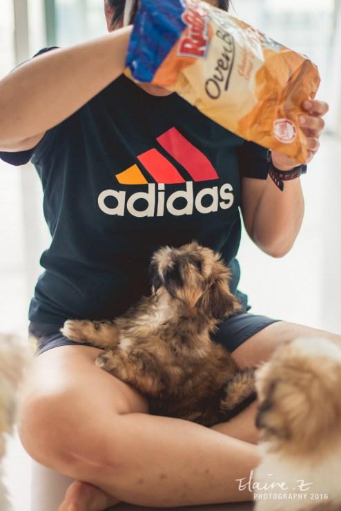 puppies-47