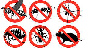 شركة حشرات