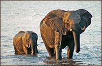 Viajes a Botswana