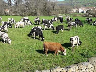 Nuestras felices vacas