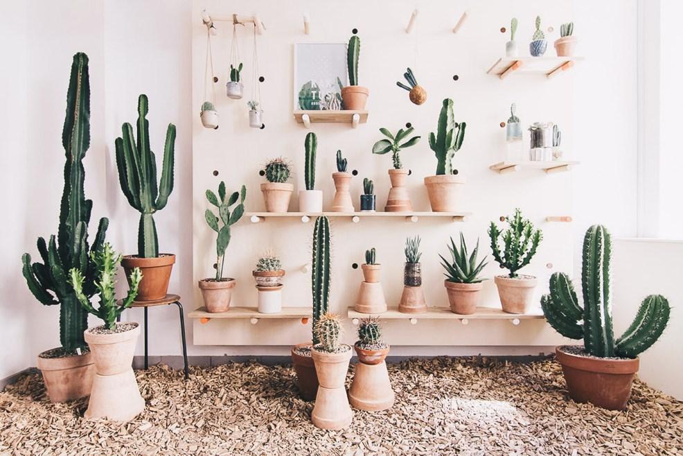 kaktus negocios copenhague