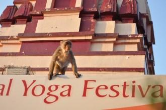 Os macacos estão por todos os lugares... (Foto: Renata Telles)