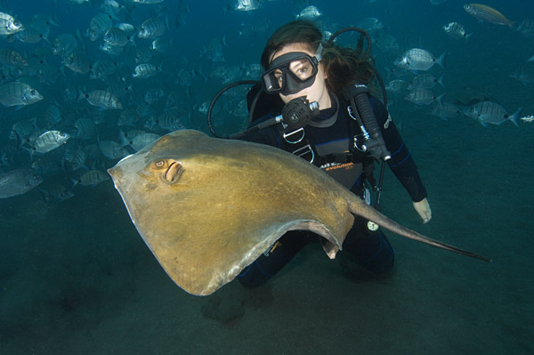 Diver underwater with Stingray