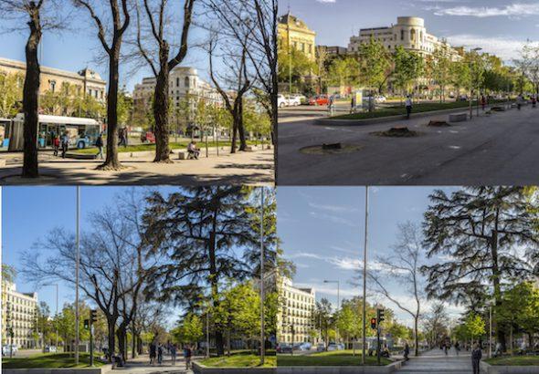 Cuatro fotografías que muestran cómo estaba y cómo ha quedado el Paseo del Prado tras la tala de cientos de árboles. Fotos: José Manuel Ballester.