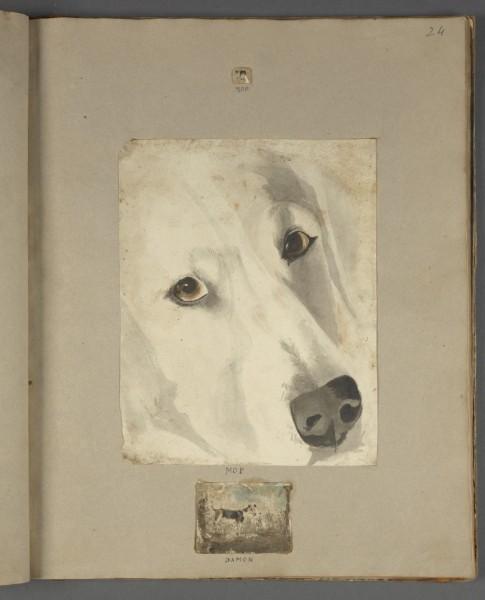 Retrato de perros. Julia Conyers album, ca. 1769-1830.