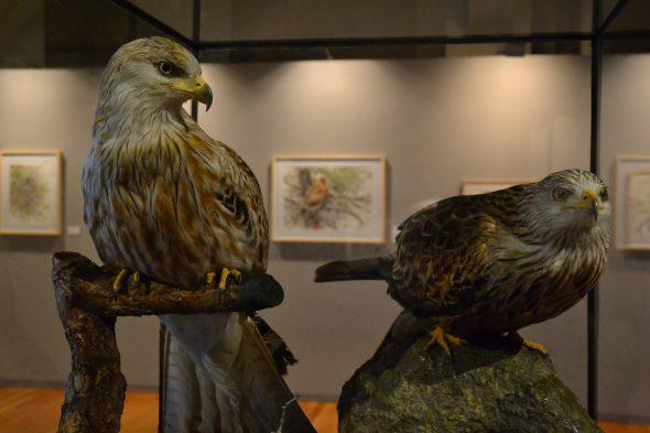 Aves naturalizadas de la colección del Museo Nacional de Ciencias Naturales junto a las obras de Juan Varela.