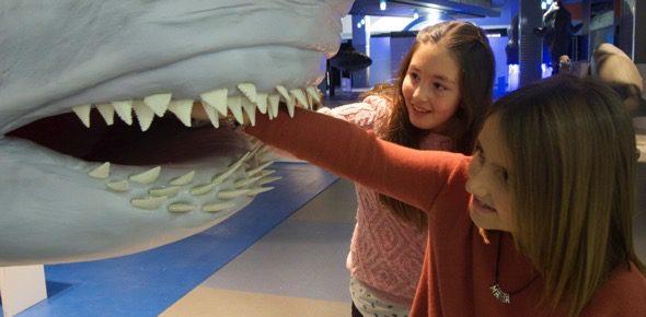 Experimentando con los dientes de los tiburones en la exposición sobre los océanos.