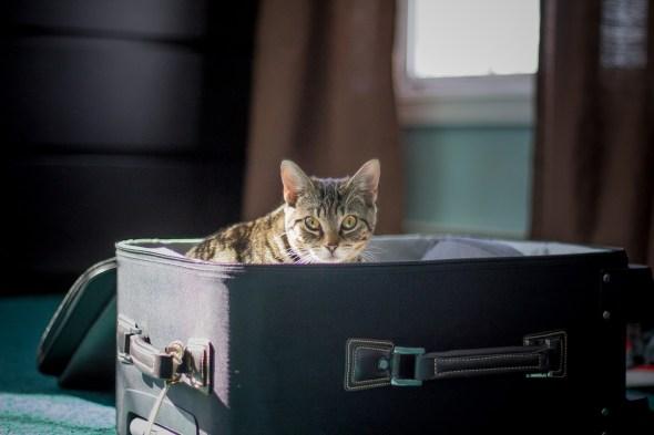 Gatos y perros viajeros. Foto: Pixabay.