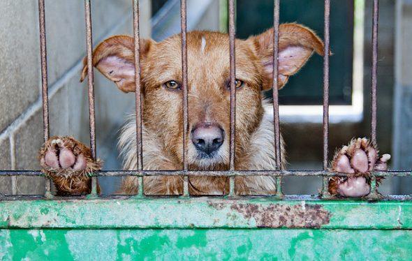Más de 150.000 mascotas son abandonadas al año en España. Foto: Pixabay.