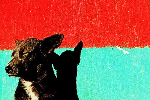 Un perro callejero toma el sol. Foto: Flickr Creative Commons.