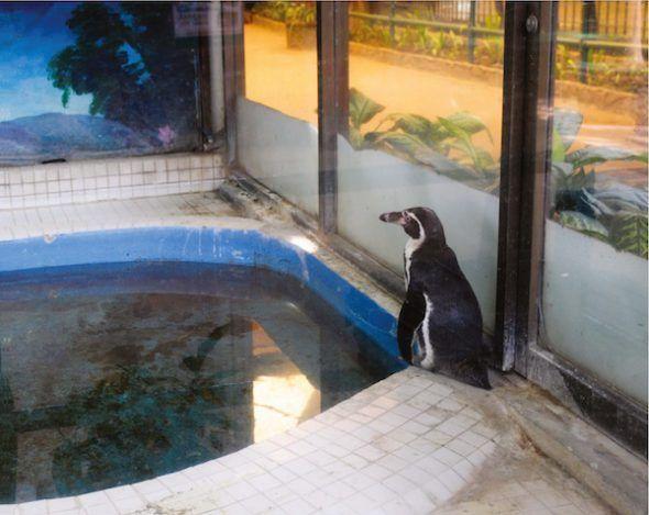 """Pingüino Humboldt, Centro Comercial Pata, Bangkok, Tailandia, 2009. """"Este pingüino solitario vive en el zoológico de Pata, que se encuentra en los dos últimos pisos de unos almacenes dentro de un caluroso y húmedo centro comercial con el mismo nombre en Bangkok""""."""
