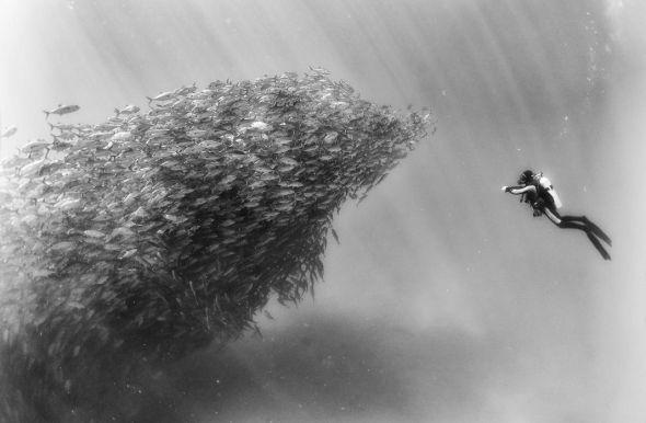 Una de las fotografías de Anuar Patjane de su proyecto 'Underwater Realm'.