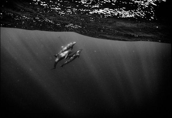 Foto: Anuar Patjane.