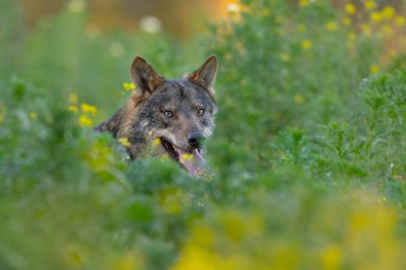 Fotograma de la película 'Barbacana, la huella del lobo'