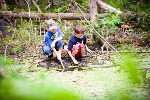 El 26 de enero de cada año se celebra el Día Mundial de la Eduación Ambiental. Foto: Pixhere.