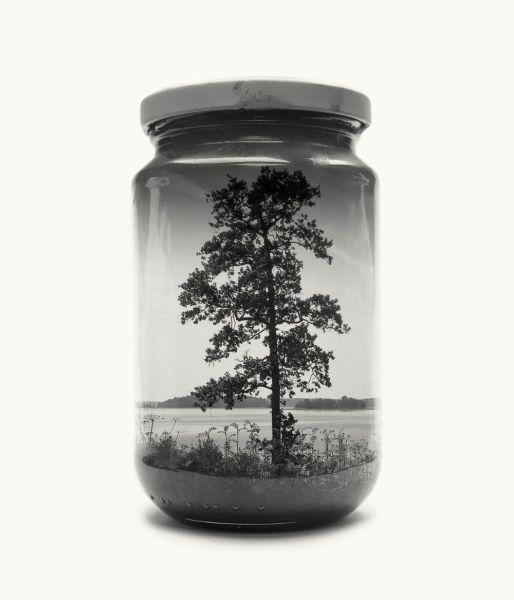 Jarred tree. Foto: Christoffer Relander.