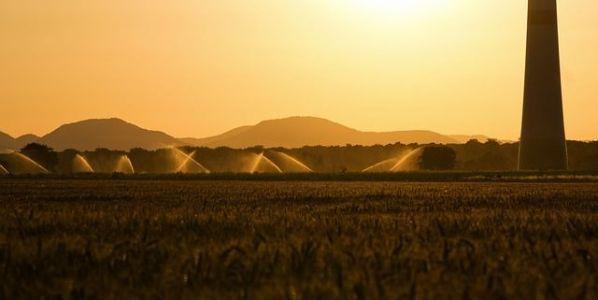 Aspersores riegan un campo al atardecer. Foto: Pixabay