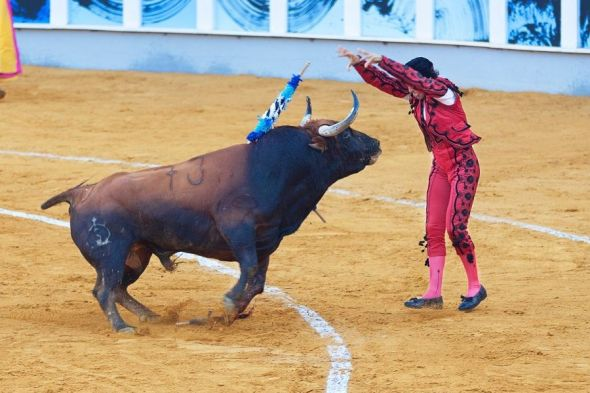 Matrato de un toro en una corrida. Foto: PxHere.