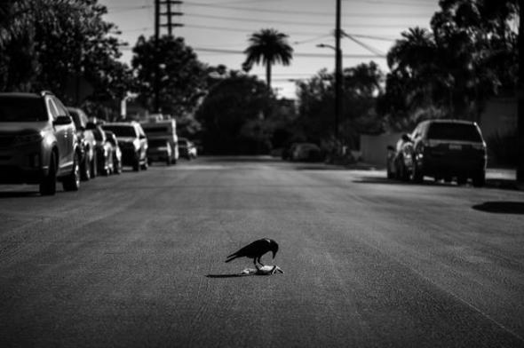 'The Crow and the Squirrel', fotografía de Juan Carlos Fresnadillo.
