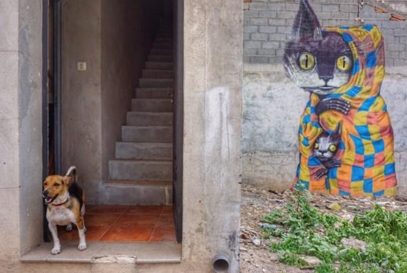 Un perro a la puerta de una casa intervenida con gatos en Fanzara. Foto: Manuel Cuéllar.