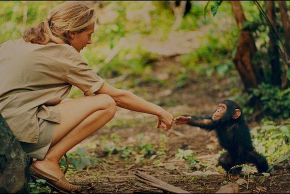 Gombe, Tanzania - Jane Goodall y Flint, la primera cría de Chimpancé nacida en Gombe tras la llegada de la primatóloga. (National Geographic Creative/ Hugo van Lawick)