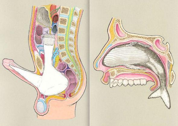 Las ilustraciones 'Porrón y picha nueva' y 'Espiráculo congestionado' del libro 'Cosas dentro de otras' de Gorka Olmo editado por Paripé Books.
