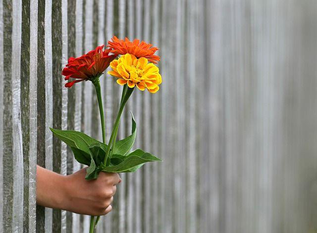 """""""Los hombres no se regalan flores. A ver si lo vas a volver rarito como tu"""". Foto: PIxabay."""
