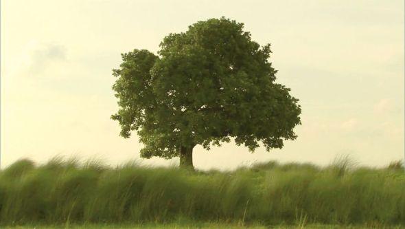 Captura de vídeo cortesía del artista / Marian Goodman Gallery, Paris; New York.