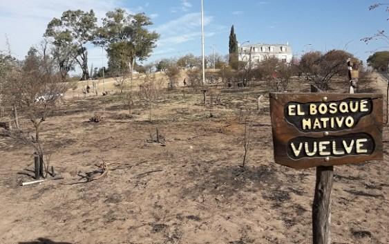 Estudiantes Recuperan el Bosque Nativo de la UNC