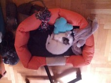 Ο μικρούλης κοιμάται