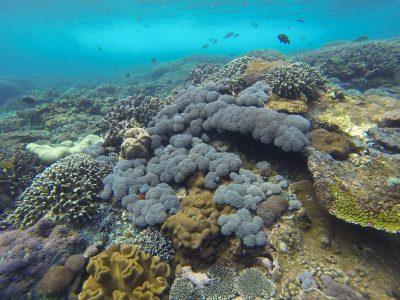 voyage-indonesie-nusa-lembongan-gopro3-18-800x600