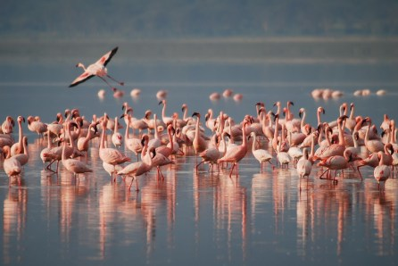 Flamingos em Ria Lagartos