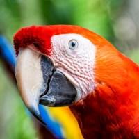 Dicas para visitar o Parque Natural Xel-Há, no México.