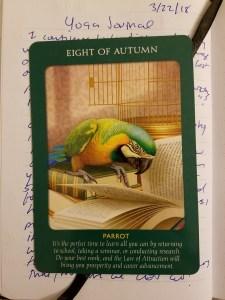 eight-of-autumn-parrot-tarot-card