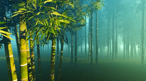 bamboo in daily life