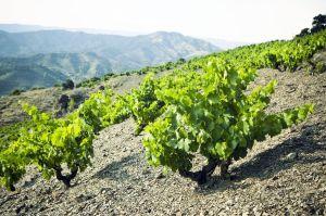 Viñas y suelos de licorella