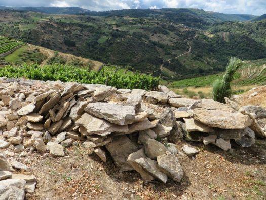 suelo de pizarra viñedo valdeorras