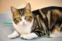 16.adán.gato adulto