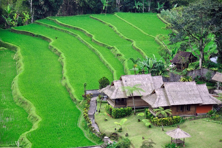 Los Arrozales en Bali