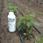 Purex Biosanitizer - Aplicación a Suelo Frambuesa