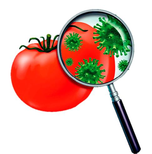limpieza-y-desinfeccion-de-verduras