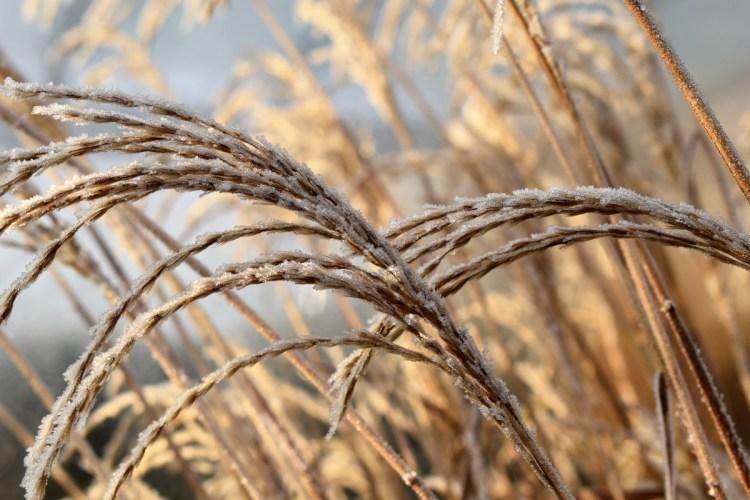 cultivos en clima frío
