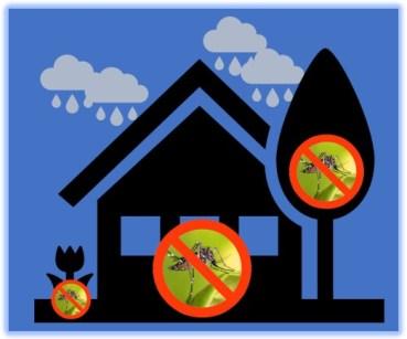 Consejos para evitar los criaderos de mosquitos en tu casa y patio