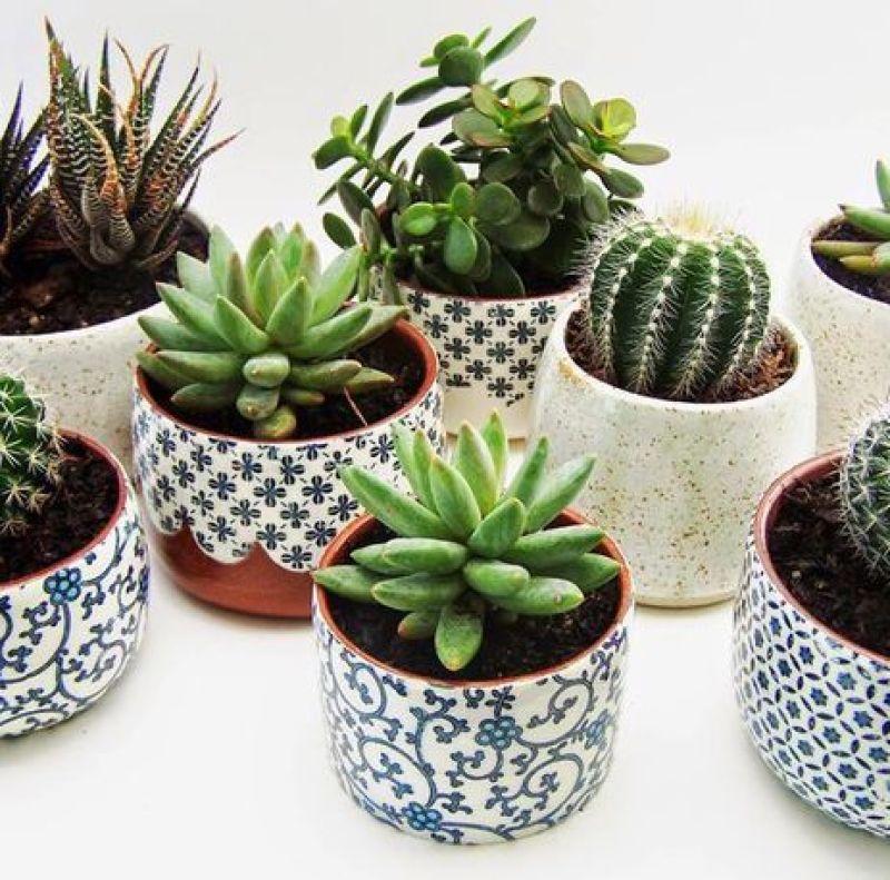 Suculentas-plantas-interior-sobreviven-a-cualquiera